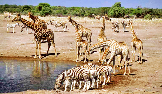 4-day etosha-safari-wildlife